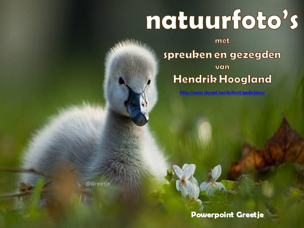 Natuurfotos Met Spreuken En Gezegden Van Hendrik Hoogland